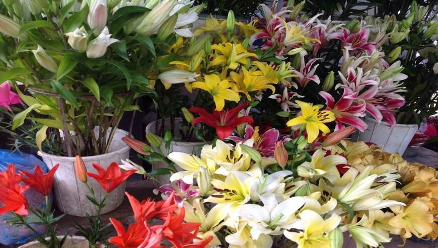Florist-Tara-Shankar-Sahoo2