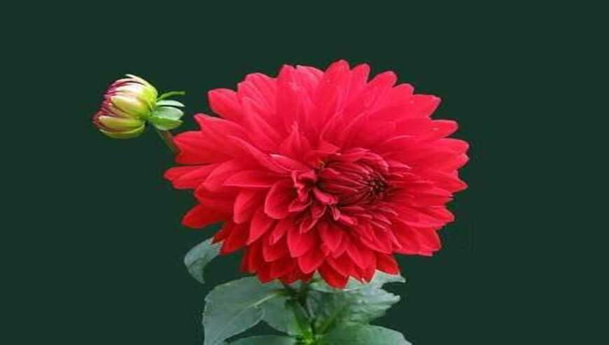Gillu-Florist1