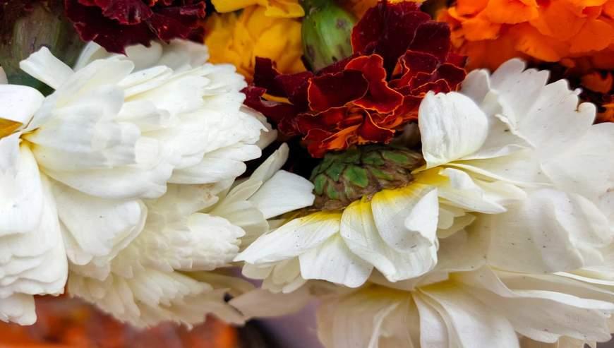 Irfan-Flower-Shop2