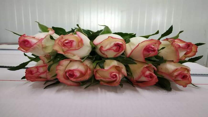 Manvi-Flowers4