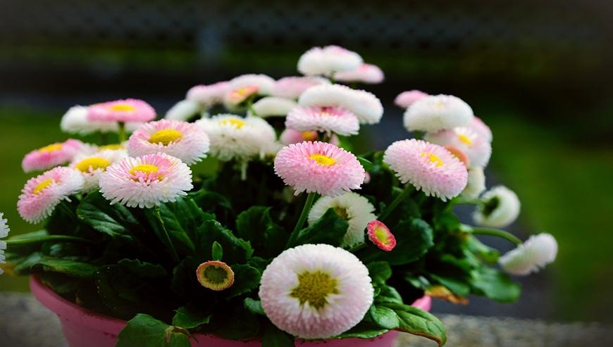 Sheetla-Florist3